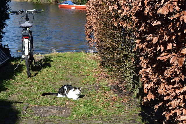 kat fiets bootje - cat bicycle boat