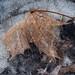 Maple Leaves In The Frozen Birdbath