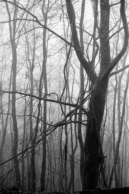 Winter scene 19