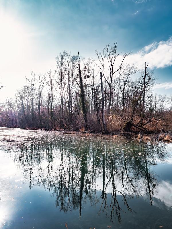 Reflets dans la forêt du Rhin... 50997513676_61a68b6d57_c