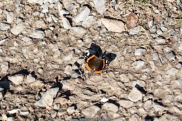February Butterfly 2021