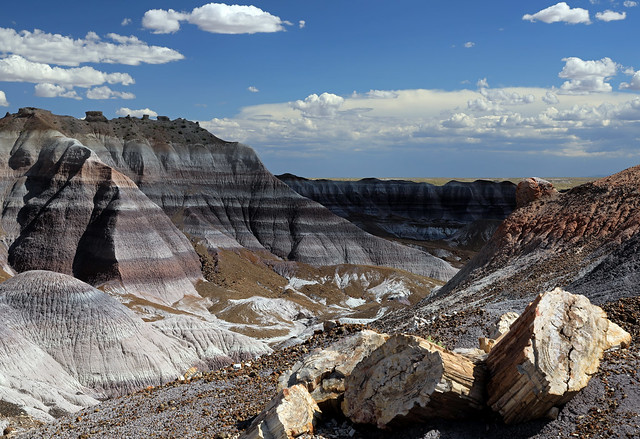 Fossil Whimsy:  Petrified Forest National Park