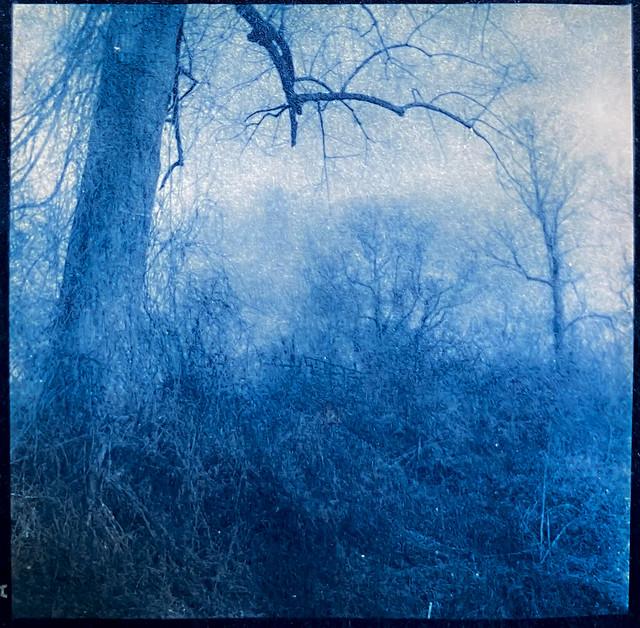 Cyanotype version, from 6x6 medium format film negative, knarly tree limb, winter landscape, Biltmore Estate, Asheville, NC, Yashica D, Fomapan 400, Moersch Eco developer, photographed- 2.28.21  contacdt print- 3.29.21