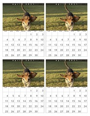 April 2021 Dog Park Calendar: Lola (4)