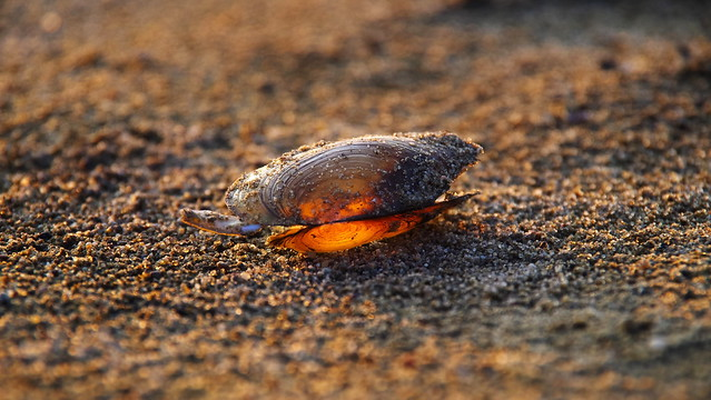 Światło w muszli / Light in the shell
