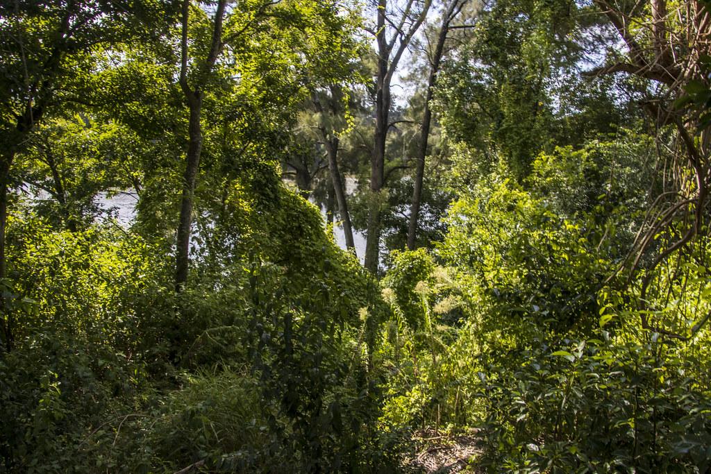 Nepean River Walk - Penrith NSW