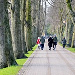 Tree lined walkway at Avenham Park