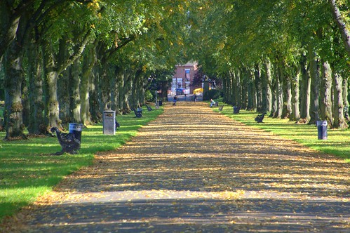 Tree lined walkway at Haslam Park | by Tony Worrall