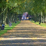 Tree lined walkway at Haslam Park