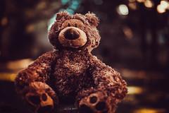 Teddy bear  (9)