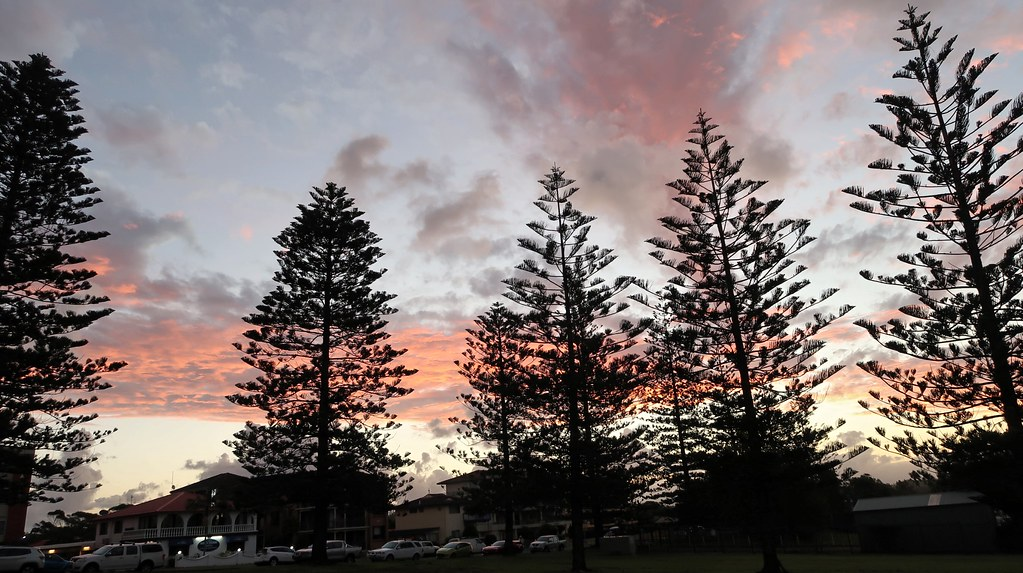 Sunset over Norfolk pines, Oxley beach