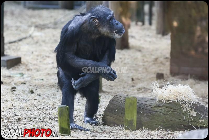 Paaseieren voor de apen in Dierenpark Amersfoort 30-03-2021