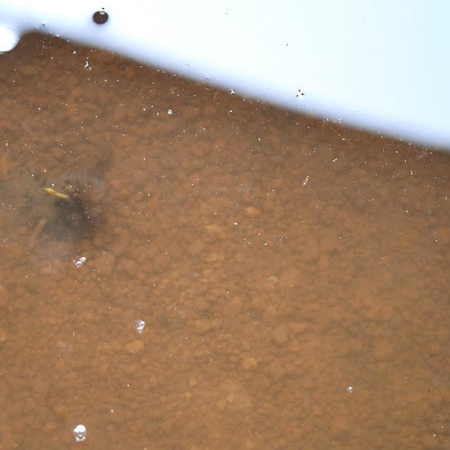 ビオトープの水が濁って透明にならない 泥が落ち着かない
