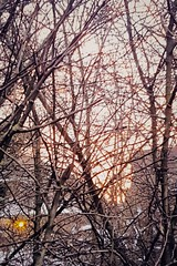 Tangled Dawn After Light Snow.