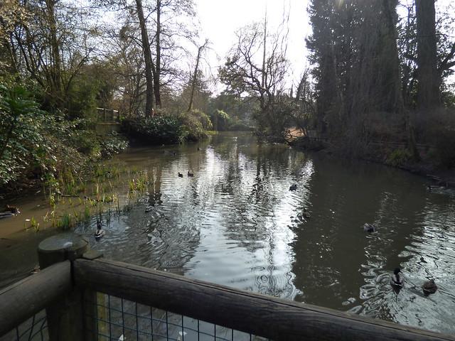 Spring has sprung at Kings Heath Park - pond