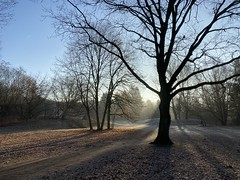 Winter Morning in the park