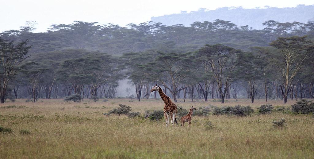 World Wildlife Day, March 3rd, 2021