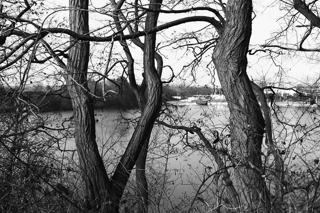 tree trunk 2 @ walking path