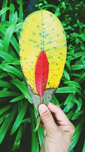 083: looking at leaves