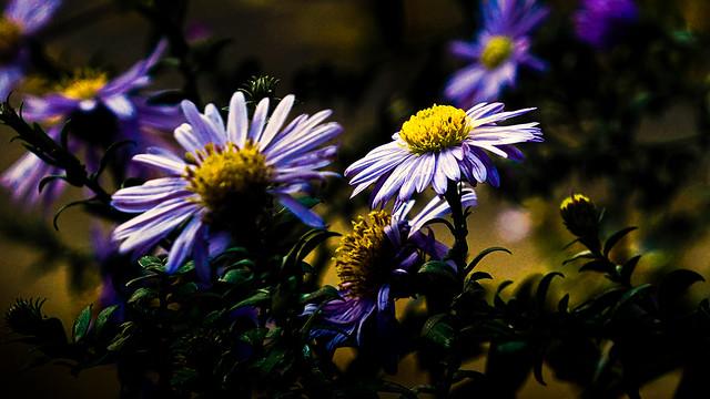 E325 Blumen, Flower
