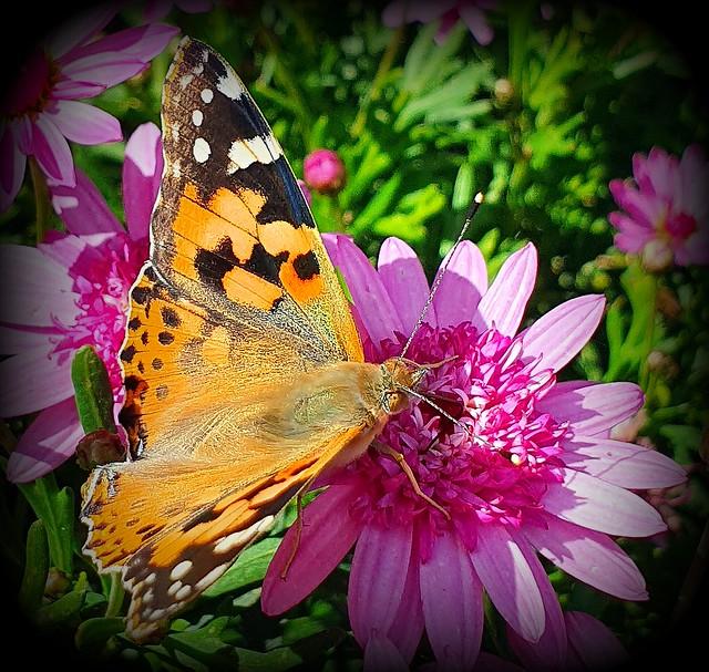 On the daisy bush