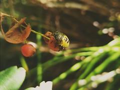 A tiny bug