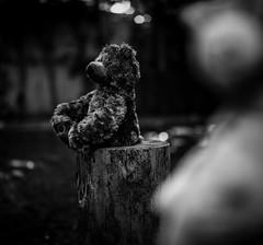 Teddy bear  (7)