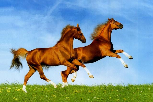 Trotando… caballos que en el viento… #EXPLORE