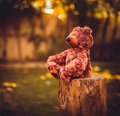 Teddy bear  (8)