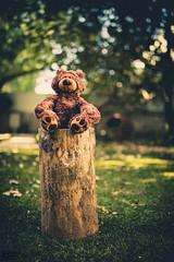Teddy bear  (4)