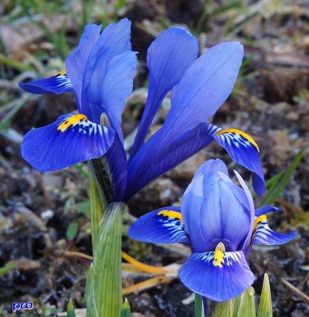 Garten im März