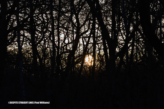 Sunrise to a winter forest  -  (Published by GETTY IMAGES)
