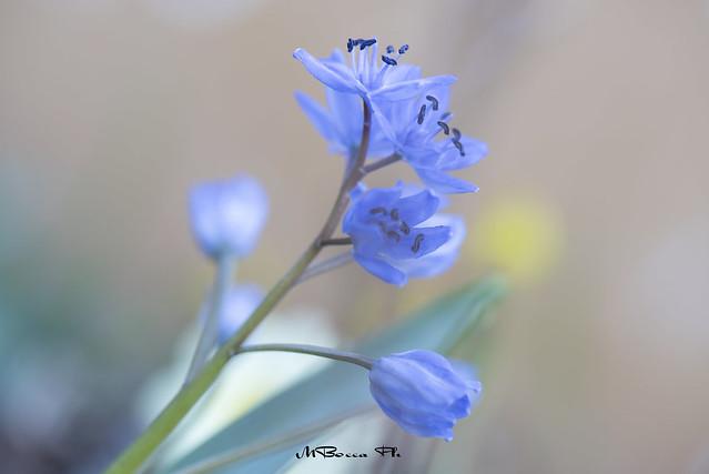 Vivere non è abbastanza… bisogna avere il sole, la libertà e un piccolo fiore. (Hans Christian Andersen)