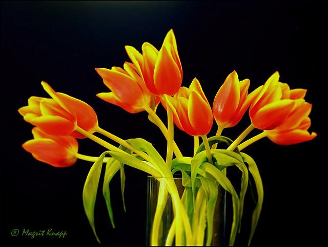 Frühlingszeit ist Tulpenzeit