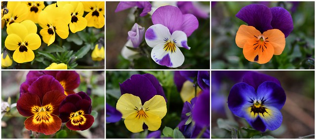 En primavera hay una flor esperándonos para darle sentido a nuestra existencia.