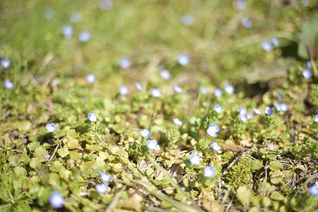 Spring Time 7_2 単焦点標準レンズ その2 絞り値による変化