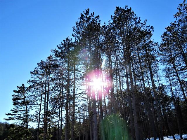 Sun & Trees  IMG_4805