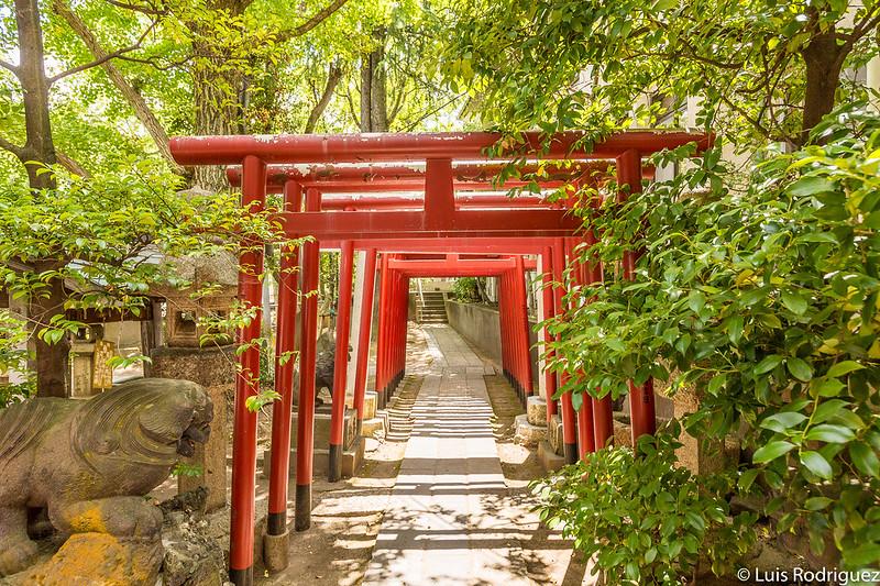 Camino de torii del pequeño santuario Inari-yashiro