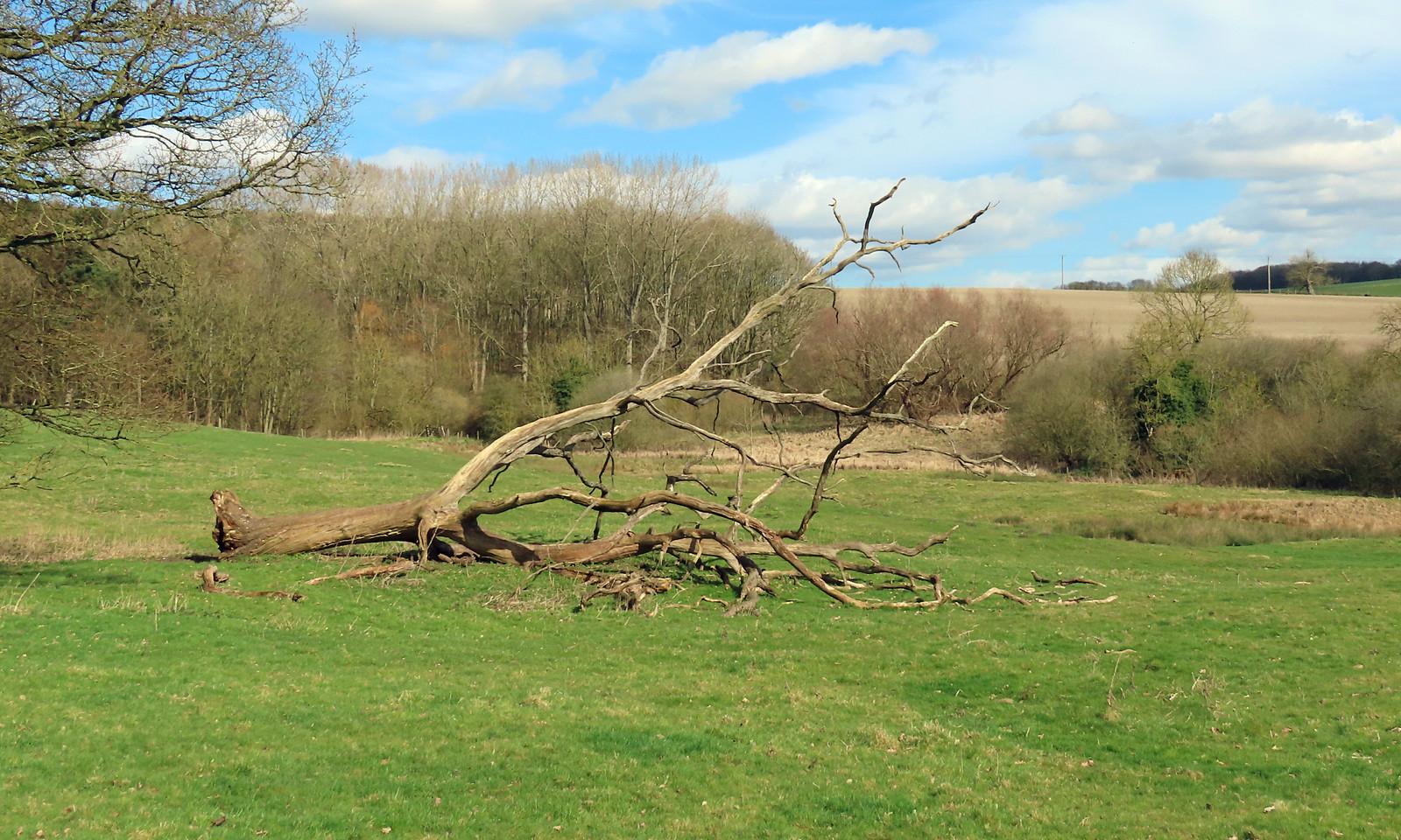 Londesborough Deer Park