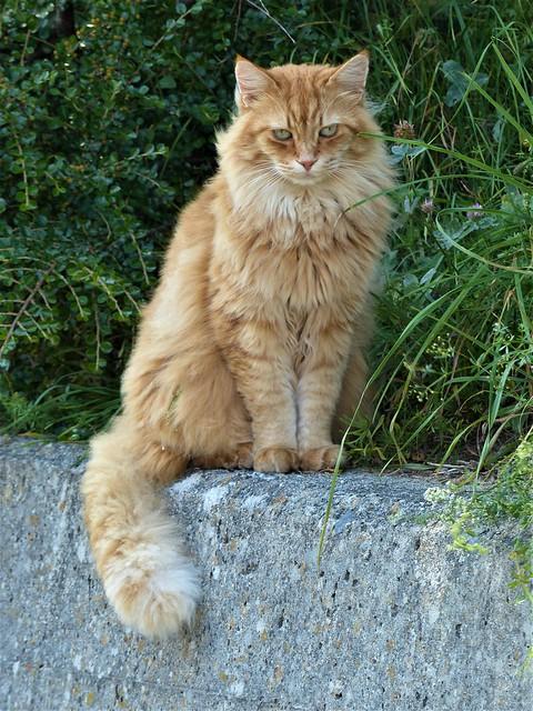 Statuesque Cat