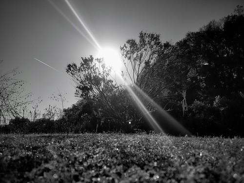 blackandwhite ranchsunrise ranch ranchflorida farmsunrise farm floridafarm floridasunrise florida floridagoldenhour tree sunrise sunray lensflare sunriseflorida