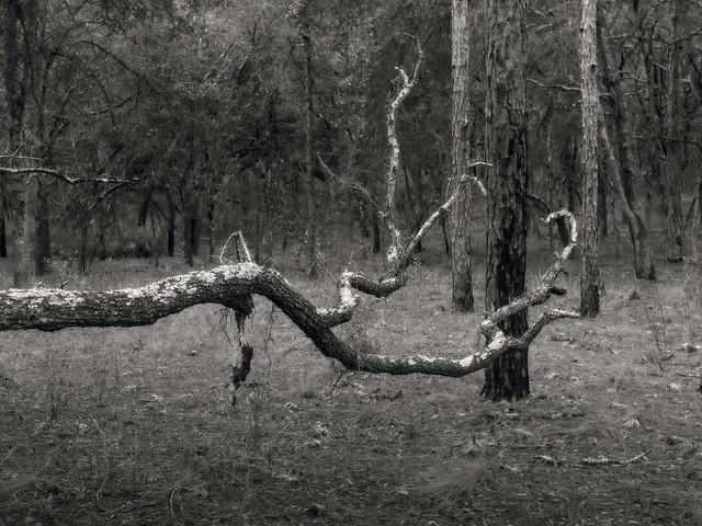 Tree tag