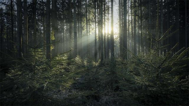 _DSC31439 In the cold dark undergrowth