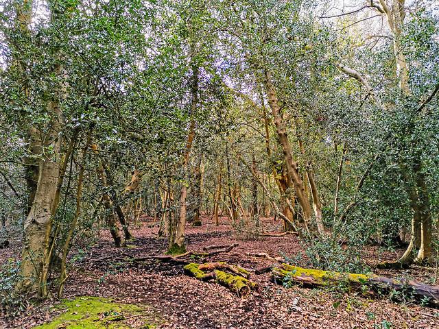 Bracebridge, Sutton Coldfield, England