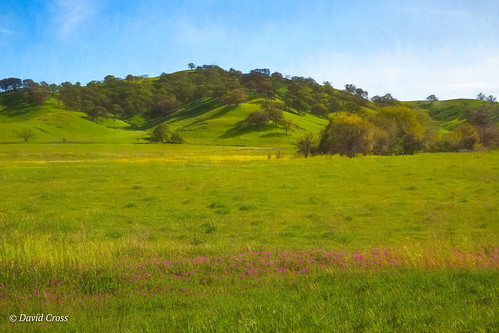 california spring landscape lagoonvalleyroad vacaville oakwoodland mustardweed lightroom6 lagoonvalley topazstudio oaktrees canonef24105mmf4lisusm canon5dmarkiii solanocounty