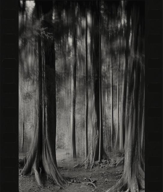 forest- film Nikon