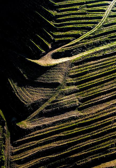 Cultivos y senderos (Dron).