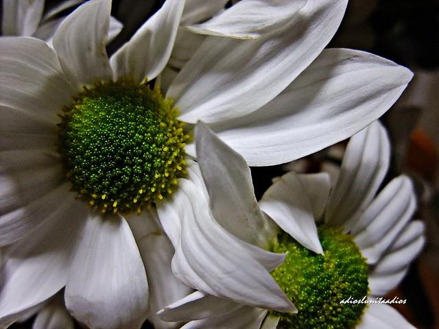 Blanco sobre verde   005