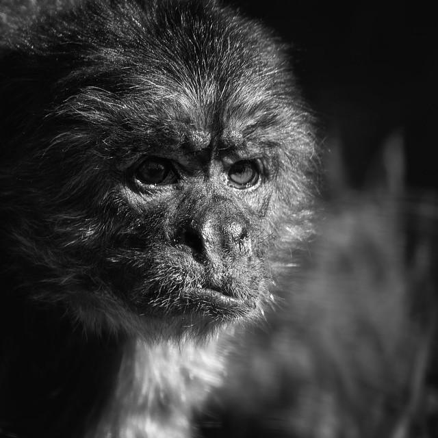 210303 - 001 Grumpy Monkey