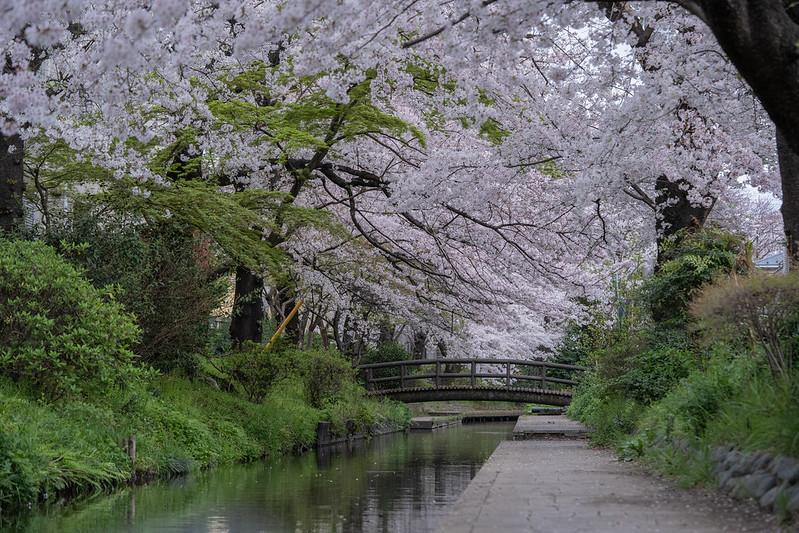 Sakura2012